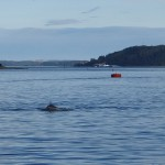 und Wale,