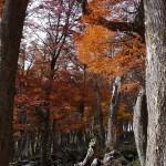 führt durch rot-goldene Buchenwälder