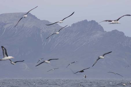 01 Seagulls on the coast of Fireland - Best Of 16